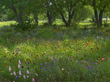 Wildflower Meadow at Jacksonport State Park, Arkansas, Usa Photographic Print by Tim Fitzharris