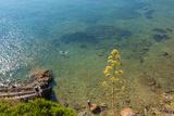 Cliffs of Talamone, Grosseto Province, Maremma, Tuscany, Italy Photographic Print by Nico Tondini