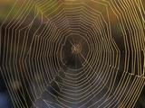 Spider Web, Florida Photographic Print by Tim Fitzharris