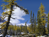Opabin Plateau Landscape, Yoho National Park, British Columbia, Canada Photographic Print by Tim Fitzharris