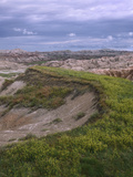 Wildflower Cling to a Ridge in Badlands National Park, South Dakota Photographic Print by Tim Fitzharris