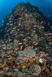 Indonesia, Alor Island. Coral Reef Scenic Photographic Print by Jaynes Gallery