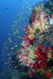 Indonesia, West Papua, Triton Bay. Coral Reef Scenic Photographic Print by Jaynes Gallery
