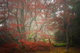 Foggy Woods Fotografisk trykk av Philippe Sainte-Laudy