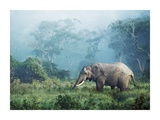 African elephant, Ngorongoro Crater, Tanzania Posters by Frank Krahmer