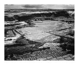 Corn Field, Indian Farm near Tuba City, Arizona, in Rain, 1941 Prints by Ansel Adams