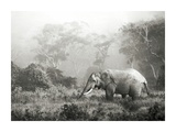 African elephant, Ngorongoro Crater, Tanzania Poster by Frank Krahmer