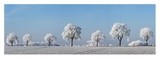 Alley tree with frost, Bavaria, Germany Posters by Frank Krahmer