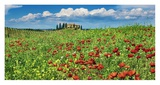 Farm house with cypresses and poppies, Tuscany, Italy Prints by Frank Krahmer
