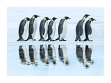Emperor penguin group, Antarctica Print by Frank Krahmer