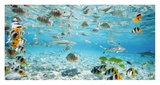 Fish and sharks in Bora Bora lagoon Print by  Pangea Images