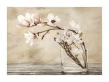 Fiori di magnolia Prints by Cristina Mavaracchio