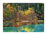 Forest in autumn colours, Sichuan, China Prints by Frank Krahmer