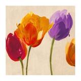 Tulip Funk companion Art by Luca Villa