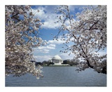 Jefferson Memorial with cherry blossoms, Washington, D.C. - Vintage Style Photo Tint Variant Print by Carol Highsmith