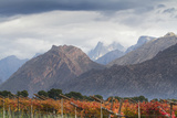 Autumn Vineyards. Hexriver Valley, Western Cape, South Africa Photographic Print by Hein von Horsten
