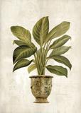 Botanica Fern Print by Emma Hill