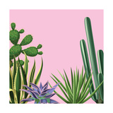Background with Cactuses and Succulents Set. Plants of Desert. Prints by  incomible