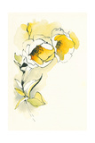 Carols Roses II Print by Shirley Novak