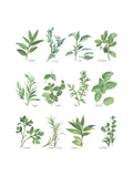 Herb Chart Prints by Chris Paschke