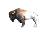 Colorful Bison Dark Brown Prints by Avery Tillmon