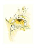 Carols Roses V Prints by Shirley Novak