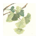 Gingko Leaves I Light Premium Giclee Print by Chris Paschke