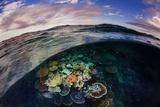 Opal Reef Off the Great Barrier Reef Fotografie-Druck von David Doubilet