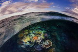 Opal Reef Off the Great Barrier Reef Photographic Print by David Doubilet
