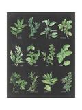 Herb Chart on Black Art by Chris Paschke