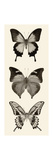 Butterfly BW Panel I Prints by Debra Van Swearingen