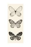 Butterfly BW Panel II Poster von Debra Van Swearingen