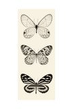 Butterfly BW Panel II Posters by Debra Van Swearingen