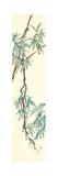 Summer Bamboo II Print by Chris Paschke