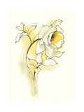 Carols Roses III Premium Giclee Print by Shirley Novak