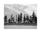 Pines Giclee Print by Savanah Plank