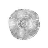 Timber Silver IV Impressão giclée por Danielle Carson