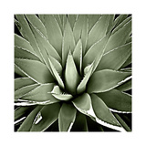 Green Succulent III Giclee Print by Mia Jensen