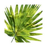 Tropical Palm IV Giclée-tryk af Melonie Miller