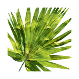 Tropical Palm IV Giclee Print by Melonie Miller