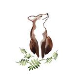 Fox's Delight Posters