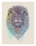 Lion King Prints by Rachel Caldwell