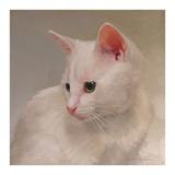 White Kitten Prints by Diane Hoeptner