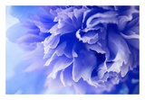 Blue Flower Posters by  PhotoINC Studio