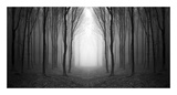 Dark Woods Posters by  PhotoINC Studio