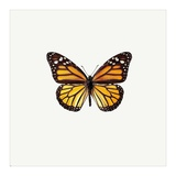 Yellow Butterfly Poster by  PhotoINC Studio