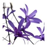 Purple Blossom Prints by  PhotoINC Studio