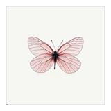 Pink Butterfly Art by  PhotoINC Studio