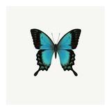 Blue Butterfly Art by  PhotoINC Studio