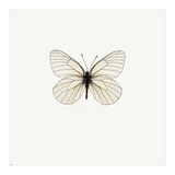 White Butterfly Posters by  PhotoINC Studio